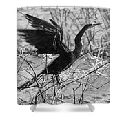 Shaking Off Water, Black And White Shower Curtain