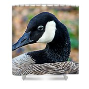 Shall I Pose For You Shower Curtain