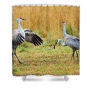 Shall We Dance Shower Curtain
