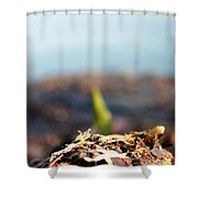 Shallow Shower Curtain