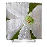 Shamrock Blossom Shower Curtain