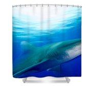 Shark In Rapid Motion Shower Curtain