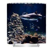 Shark In Zoo Aquarium Shower Curtain