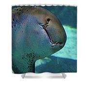 Shark View Shower Curtain