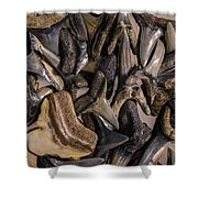 Sharks Teeth 9 Shower Curtain