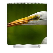 Sharp Curve Shower Curtain