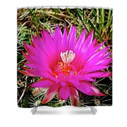 Pincushion Cactus - Coryphantha Vivipara Shower Curtain