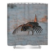 Sharptail Grouse On Snow Shower Curtain