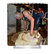 Collie Shearing Shed Shower Curtain