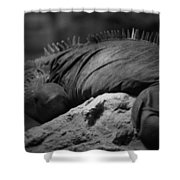 Shedd Aquarium Iguana Shower Curtain
