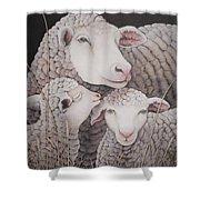 Sheep Ahoy Shower Curtain
