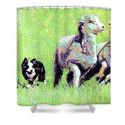 Sheep And Dog Shower Curtain