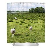 Sheep Animals Shower Curtain