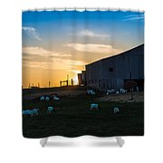 Sheep At Sunset Shower Curtain
