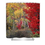 Sheep Canyon In Autumn Shower Curtain