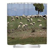 Sheep Country Shower Curtain