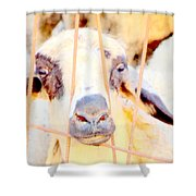I Think They Want To Eat Me So Please Come And Release Me At Once  Shower Curtain by Hilde Widerberg