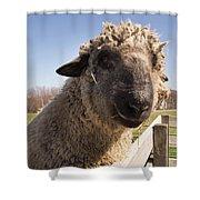 Sheep Face 2 Shower Curtain