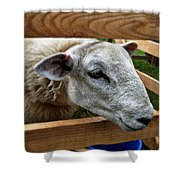 Sheep Four Shower Curtain