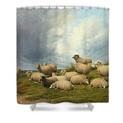 Sheep In A Pasture Shower Curtain