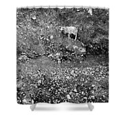 Sheep In Bw Shower Curtain