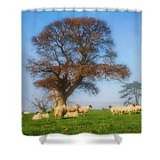 Sheep In Somerset - Impressions Shower Curtain