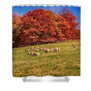 Sheep In The Autumn Meadow Shower Curtain