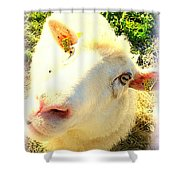 So Sheep Of You To Leave Me Here  Shower Curtain