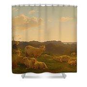 Sheep On A Hill Near Skarridso Shower Curtain