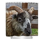 Sheep One Shower Curtain