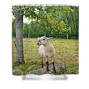 Happy Sheep Posing For Her Photo Shower Curtain