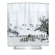 Sheep Shelter  Shower Curtain