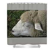 Sheep Sleep Shower Curtain