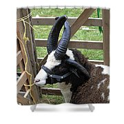 Sheep Three Shower Curtain