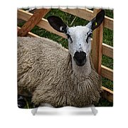 Sheep Two Shower Curtain