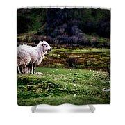 Sheep View Shower Curtain