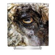 Sheep's Eye Shower Curtain