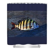 Sheepshead Fish Shower Curtain