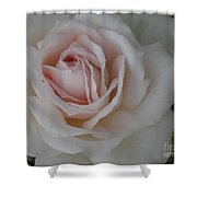 Sheer Bliss Rose Shower Curtain
