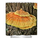 Shelf Fungus - Basidiomycota Shower Curtain