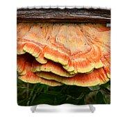 Shelf Mushroom Shower Curtain