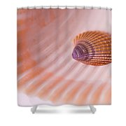 Shell And Baby Shell Shower Curtain