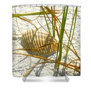 Shell And Beach Shower Curtain