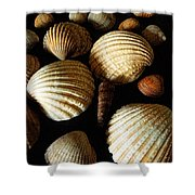 Shell Art - D Shower Curtain