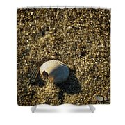 Shell At Dawn Shower Curtain
