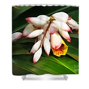 Shell Ginger Flowers Shower Curtain