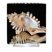 Shell On Black Shower Curtain