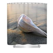 Shell On The Beach Shower Curtain