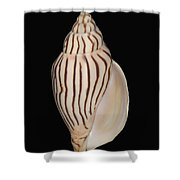 Shell Pattern - Bw Shower Curtain