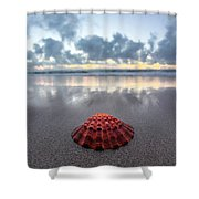 Shell Rise Shower Curtain